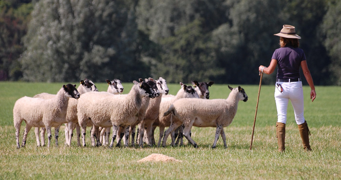 SHEEP DOG EXPERIENCE